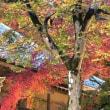 琵琶湖一周紅葉めぐりバスツアー
