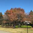 紅葉と桜と