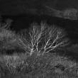 晩秋の祓川