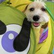 幼稚園体験にきてくれた【ミトンちゃん】(*^-^*)  犬のしつけ教室@アロハドギー