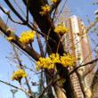 春の朝 花景色 20180313