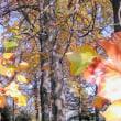 只今の~秋模様