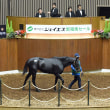 【ジェイエス・秋季繁殖馬セール2018】は明日10/24(水)開催!