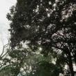 何年も見ている木々のはざまで。