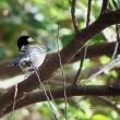 2016 道保川公園で確認できた野鳥(冬鳥、留鳥!!!)