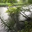 雨の千歳川