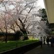 醍醐寺の桜・三宝院・霊宝館