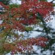 10月12日 初秋の紅葉
