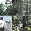 ラクウショウ ( 落羽松 ) の森