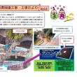 小島トンネル起点側(明かり部)「工事だより」第6号