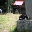 蜂城山の有名登山猫?