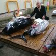 2018「鮮魚・青果」市場の初せり!大間の天然マグロ139㌔、108㌔に驚く!