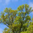 風光る4月~新緑に萌える森