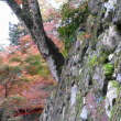 晩秋から初冬へ正暦寺の見所