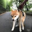 愛犬との日々のご報告(*'▽'*)