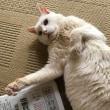 何て美しい白猫なんだ。