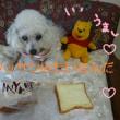MIYABIのデニッシュ食パン ウマ━(●゚∀゚●)━ス!!!!