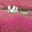☆奇跡の時間☆秋晴れを愉しもう~♪<国営武蔵丘陵森林公園>