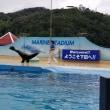 おっさん4人で伊豆の旅(6)  下田海中水族館  ~ イルカショー&アシカショー ~