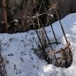 わが家の庭にも春が?