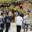 大谷焼 釜祭り