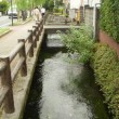 狩野川水系桜川