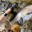 昨年に続いて今年も、林道歩き渓流釣り(北海道南西部)