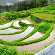 徳島県上勝町の棚田