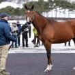 【アロースタッド種牡馬展示会2018】が開催!(新種牡馬ディーマジェスティやビッグアーサーなど32頭)