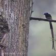 今日ノ鳥コレクション・・・スッキリした枝にとまり