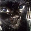 黒い成猫を保護しました メメちゃん