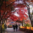 井之頭公園にの紅葉