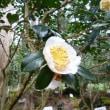 ツーリング 尾鷲椿園