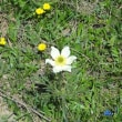 【旅】ツェルマット、マッターホルン(2) ~花の道~