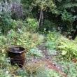 雨の朝、秋深まって~10月中旬の庭・2018
