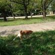 忠霊塔公園でお散歩
