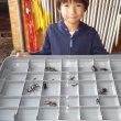 昆虫採取 今日はカブトムシも♪