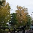 街路樹黄葉始まる