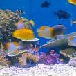 ソニービルの熱帯魚
