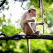 🌟スリランカの旅⑧ ~野生の猿~