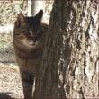 いろいろな木に出会った日