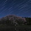 中能登町 鍋山古墳の桜