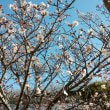 冬❄の花🌼
