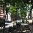 福岡市のけやき通り  私の散歩道