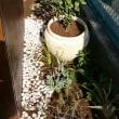 小屋まわりに植栽