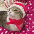 「かわいいかわいい クリスマス猫ちゃん」をかぶってみました♪