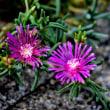 お盆 庭に咲く花