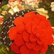 夏に赤のお花ベレー