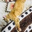 この猫、自分が可愛いと知っている