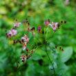 雨に濡れる花々(赤塚植物園)